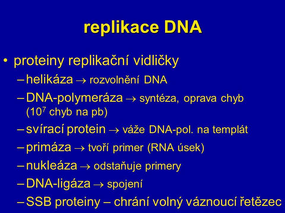 proteiny replikační vidličky –helikáza  rozvolnění DNA –DNA-polymeráza  syntéza, oprava chyb (10 7 chyb na pb) –svírací protein  váže DNA-pol. na t