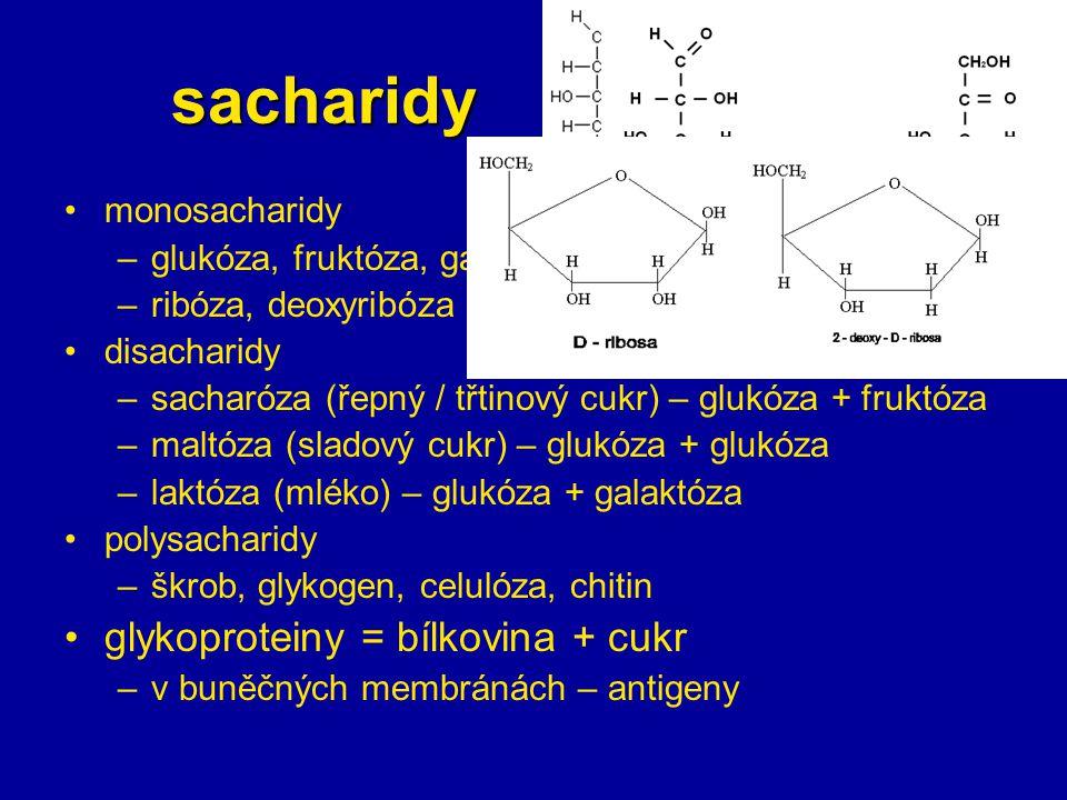 sacharidy monosacharidy –glukóza, fruktóza, galaktóza –ribóza, deoxyribóza disacharidy –sacharóza (řepný / třtinový cukr) – glukóza + fruktóza –maltóz