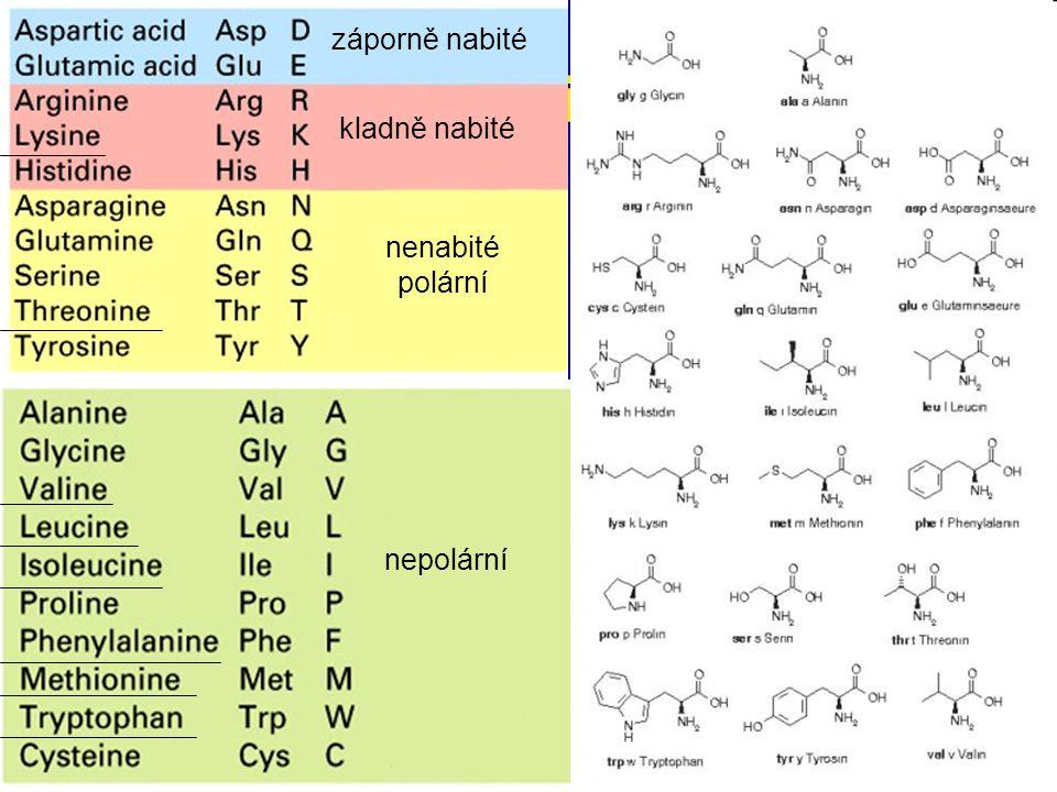 proteiny záporně nabité kladně nabité nenabité polární nepolární