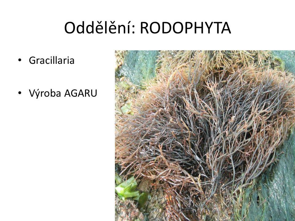 Oddělění: RODOPHYTA Gracillaria Výroba AGARU