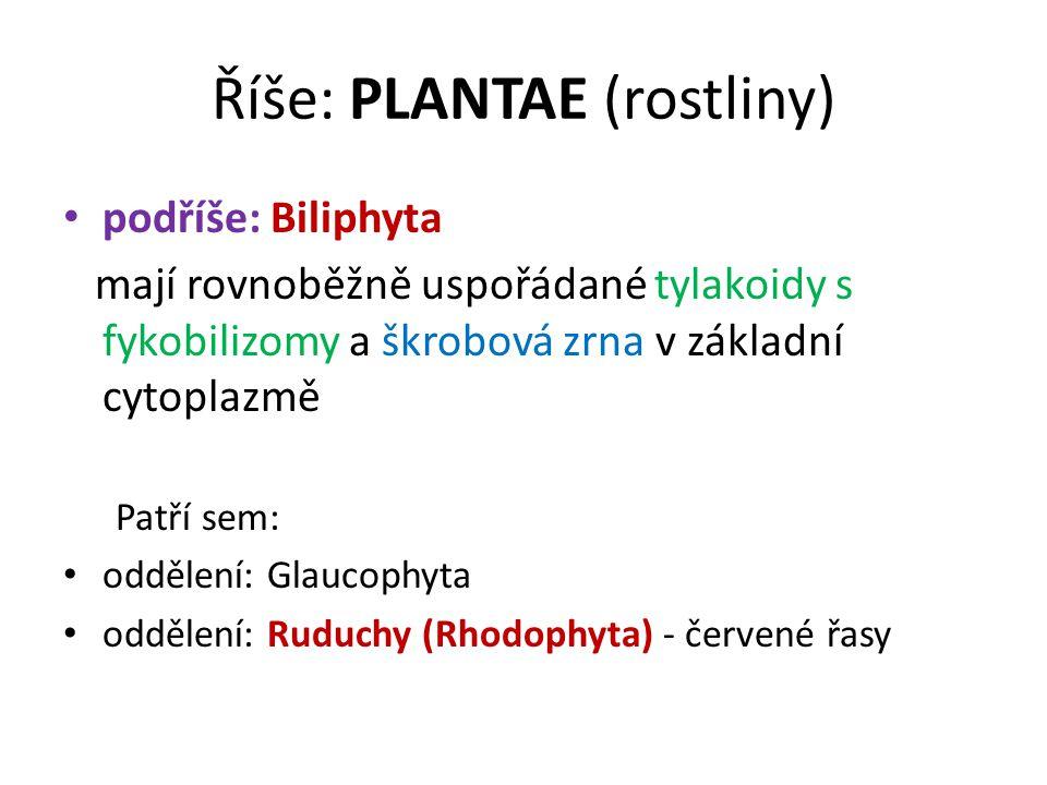 Říše: PLANTAE (rostliny) podříše: Biliphyta mají rovnoběžně uspořádané tylakoidy s fykobilizomy a škrobová zrna v základní cytoplazmě Patří sem: odděl