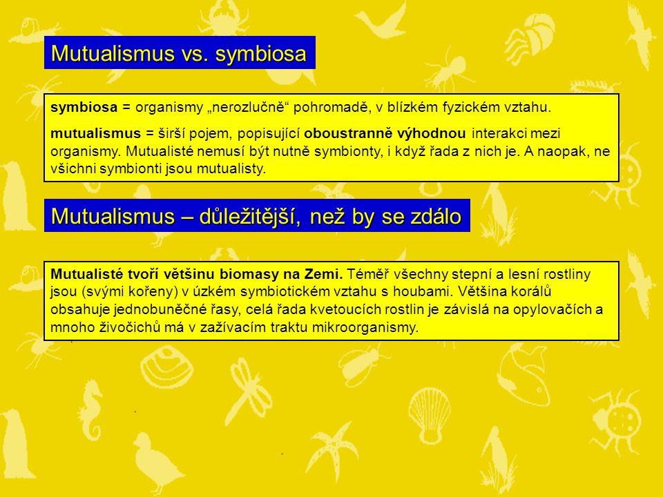 """Mutualismus vs.symbiosa symbiosa = organismy """"nerozlučně pohromadě, v blízkém fyzickém vztahu."""