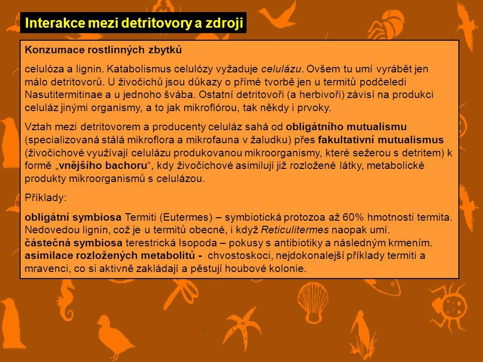 Interakce mezi detritovory a zdroji Konzumace exkrementů Od masožravců – špatná kvalita, protože potrava je využita s vysokou účinností (až 80%).