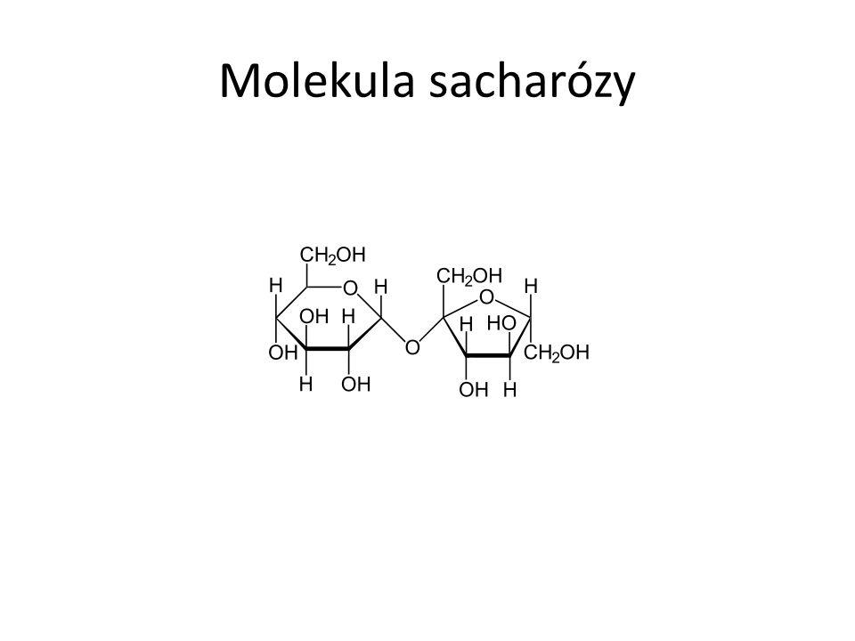 Molekula sacharózy