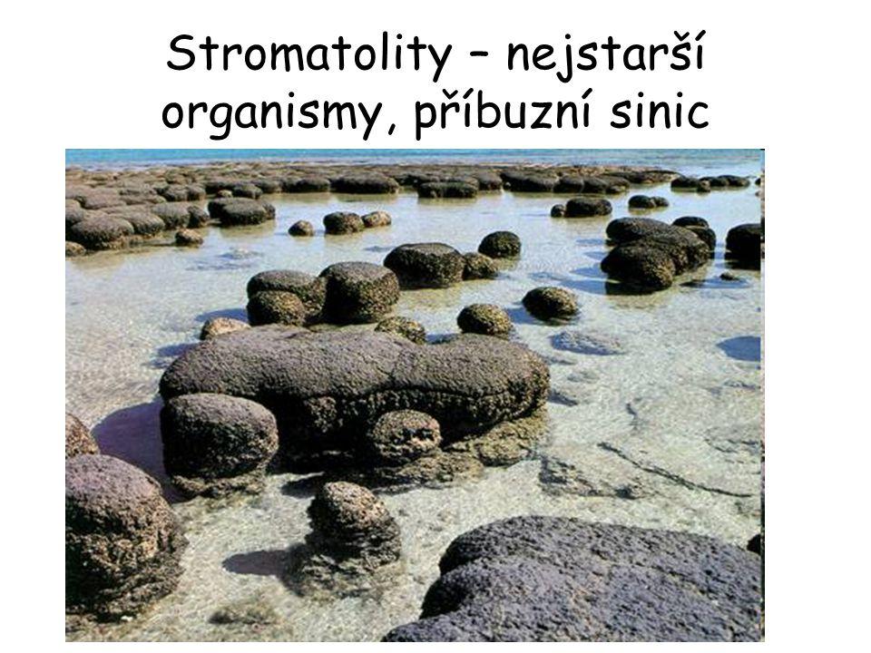 Stromatolity – nejstarší organismy, příbuzní sinic