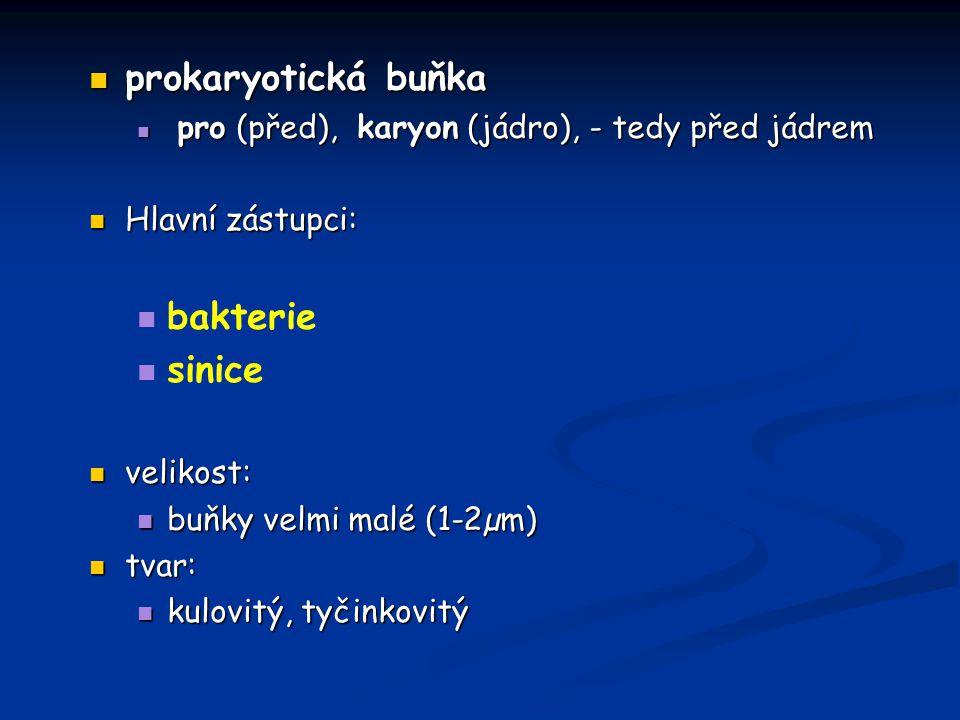 prokaryotická buňka prokaryotická buňka pro (před), karyon (jádro), - tedy před jádrem pro (před), karyon (jádro), - tedy před jádrem Hlavní zástupci: Hlavní zástupci: bakterie sinice velikost: velikost: buňky velmi malé (1-2µm) buňky velmi malé (1-2µm) tvar: tvar: kulovitý, tyčinkovitý kulovitý, tyčinkovitý