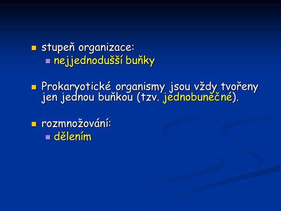 stupeň organizace: stupeň organizace: nejjednodušší buňky nejjednodušší buňky Prokaryotické organismy jsou vždy tvořeny jen jednou buňkou (tzv.