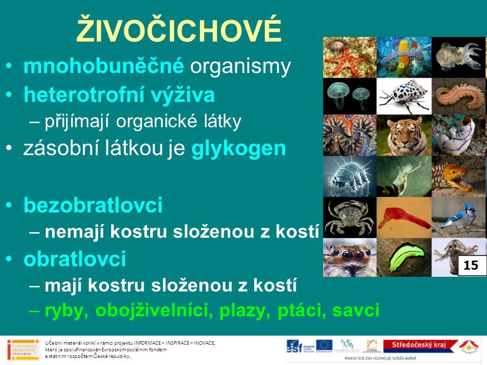 ŽIVOČICHOVÉ mnohobuněčné organismy heterotrofní výživa –přijímají organické látky zásobní látkou je glykogen bezobratlovci –nemají kostru složenou z kostí obratlovci –mají kostru složenou z kostí –ryby, obojživelníci, plazy, ptáci, savci Učební materiál vznikl v rámci projektu INFORMACE – INSPIRACE – INOVACE, který je spolufinancován Evropským sociálním fondem a státním rozpočtem České republiky.