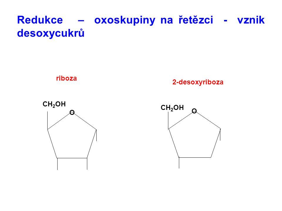Redukce – oxoskupiny na řetězci - vznik desoxycukrů O O CH 2 OH riboza 2-desoxyriboza
