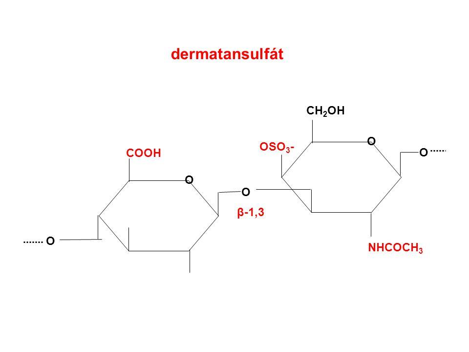 dermatansulfát COOH O CH 2 OH O O O O NHCOCH 3 β-1,3 OSO 3 -