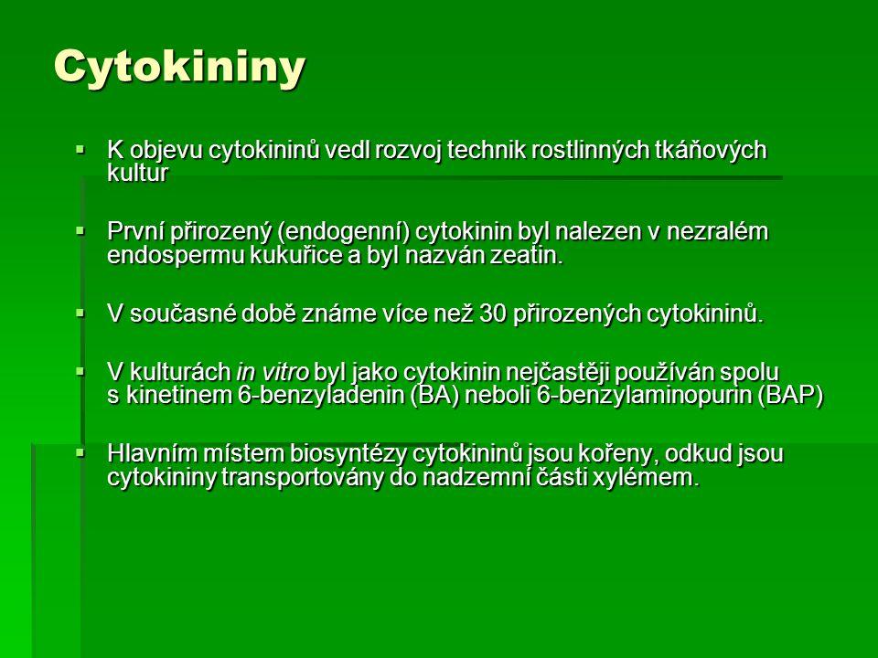 Hlavní fyziologické účinky cytokininů  Buněčné dělení: Ve všech meristematických, intenzivně se dělících pletivech nacházíme vysoké koncentrace aktivních cytokininů.