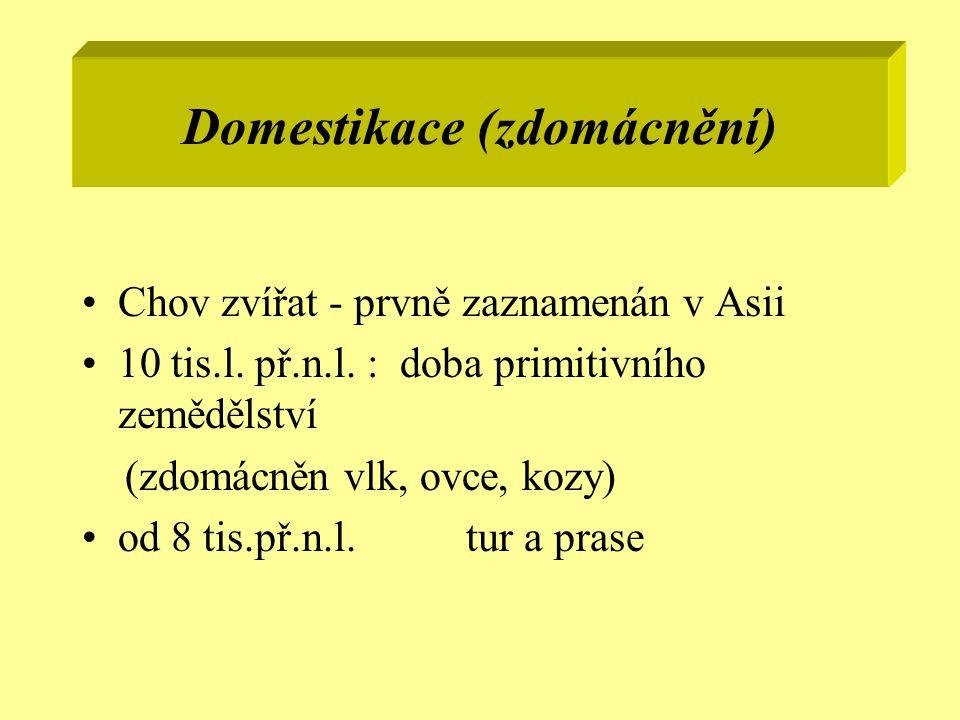 Domestikace (zdomácnění) Chov zvířat - prvně zaznamenán v Asii 10 tis.l. př.n.l. : doba primitivního zemědělství (zdomácněn vlk, ovce, kozy) od 8 tis.