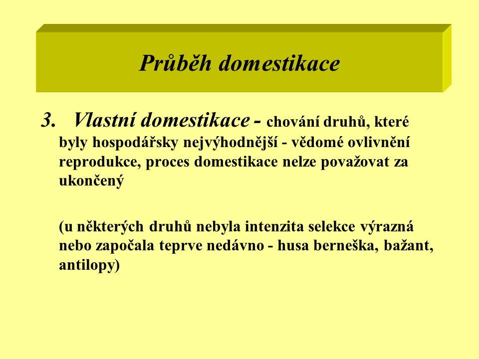 Průběh domestikace 3. Vlastní domestikace - chování druhů, které byly hospodářsky nejvýhodnější - vědomé ovlivnění reprodukce, proces domestikace nelz