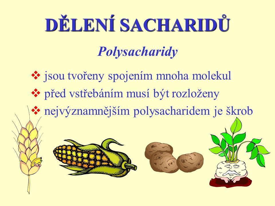 DĚLENÍ SACHARIDŮ  jsou tvořeny spojením mnoha molekul  před vstřebáním musí být rozloženy  nejvýznamnějším polysacharidem je škrob Polysacharidy