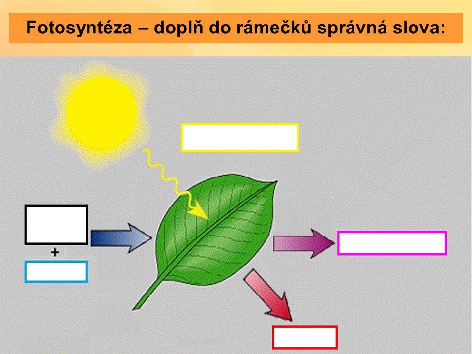 Fotosyntéza – doplň do rámečků správná slova: