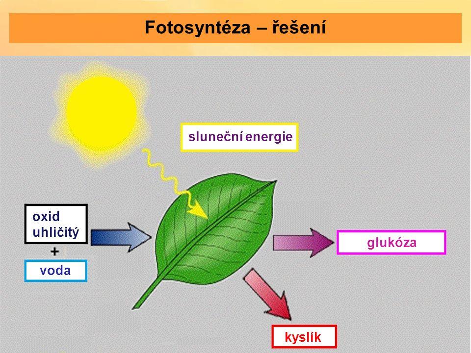 sluneční energie oxid uhličitý voda kyslík glukóza Fotosyntéza – řešení