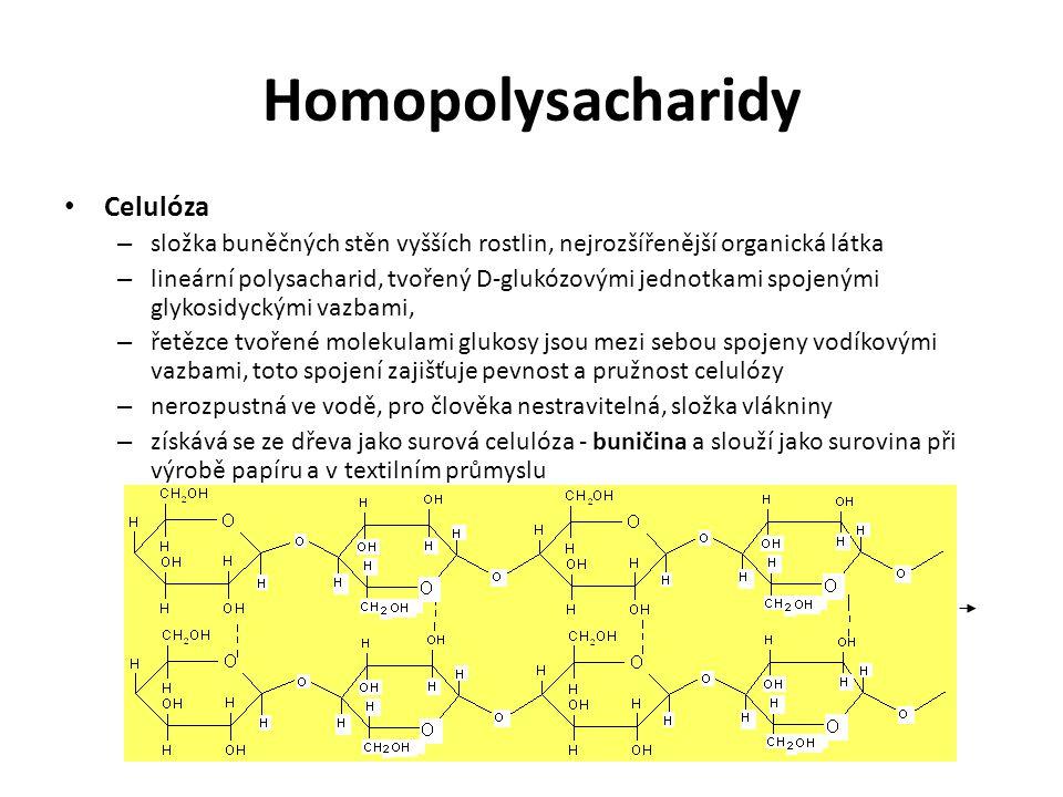 Homopolysacharidy Celulóza – složka buněčných stěn vyšších rostlin, nejrozšířenější organická látka – lineární polysacharid, tvořený D-glukózovými jednotkami spojenými glykosidyckými vazbami, – řetězce tvořené molekulami glukosy jsou mezi sebou spojeny vodíkovými vazbami, toto spojení zajišťuje pevnost a pružnost celulózy – nerozpustná ve vodě, pro člověka nestravitelná, složka vlákniny – získává se ze dřeva jako surová celulóza - buničina a slouží jako surovina při výrobě papíru a v textilním průmyslu