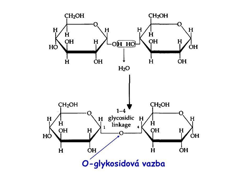 Homopolysacharidy Glykogen – zásobní látka živočichů – obsažen především v játrech a ve svalech – je rozpustný ve vodě Chitin – základní složka kutikuly členovců, buněčných stěn hub a některých řas Pektiny – zásobní polysacharidy složité struktury – obsaženy např.