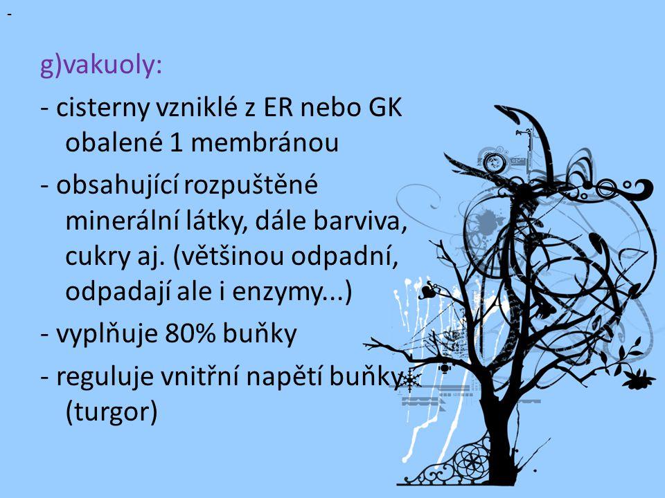 g)vakuoly: - cisterny vzniklé z ER nebo GK obalené 1 membránou - obsahující rozpuštěné minerální látky, dále barviva, cukry aj.