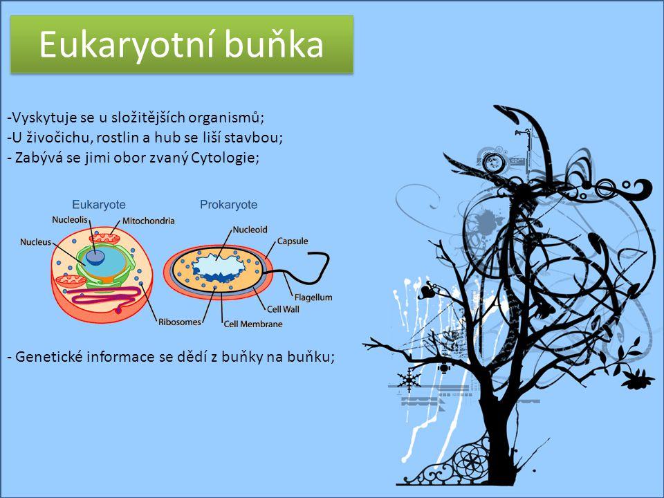 © Letohradské soukromé gymnázium o.p.s. Eukaryotní buňka -Vyskytuje se u složitějších organismů; -U živočichu, rostlin a hub se liší stavbou; - Zabývá