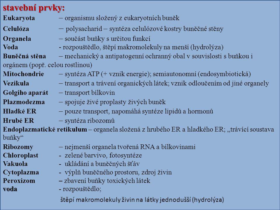 stavební prvky: Eukaryota – organismu složený z eukaryotních buněk Celulóza – polysacharid – syntéza celulózové kostry buněčné stěny Organela – součást buňky s určitou funkcí Voda- rozpouštědlo, štěpí makromolekuly na menší (hydrolýza) Buněčná stěna – mechanický a antipatogenní ochranný obal v souvislosti s buňkou i orgánem (popř.