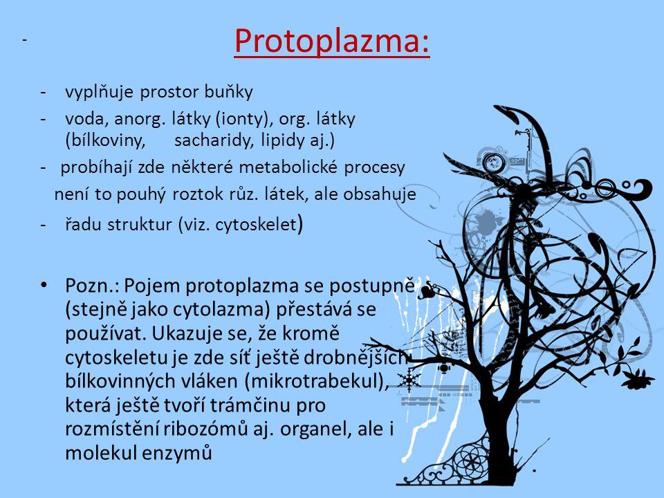e) Ribozomy: - drobná zrníčka tvořena RNA a bílkovinami -syntéza bílkovin -