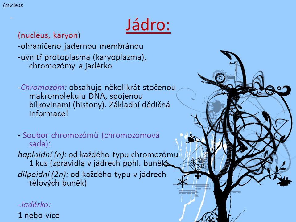 © Letohradské soukromé gymnázium o.p.s. Jádro: (nucleus, karyon) -ohraničeno jadernou membránou -uvnitř protoplasma (karyoplazma), chromozómy a jadérk