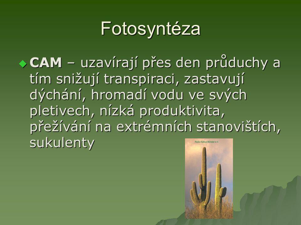 Fotosyntéza  CAM – uzavírají přes den průduchy a tím snižují transpiraci, zastavují dýchání, hromadí vodu ve svých pletivech, nízká produktivita, přežívání na extrémních stanovištích, sukulenty
