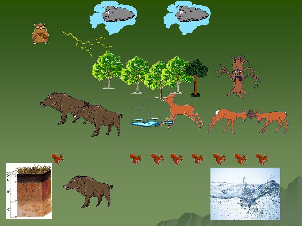 Příklady ekosystému:  rybník  pole  akvárium  zkumavka s mikroorganismy  les  louka  půda
