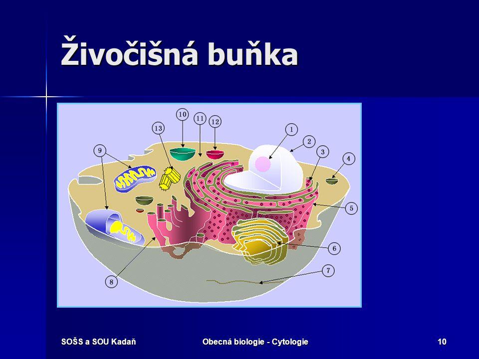 SOŠS a SOU KadaňObecná biologie - Cytologie10 Živočišná buňka