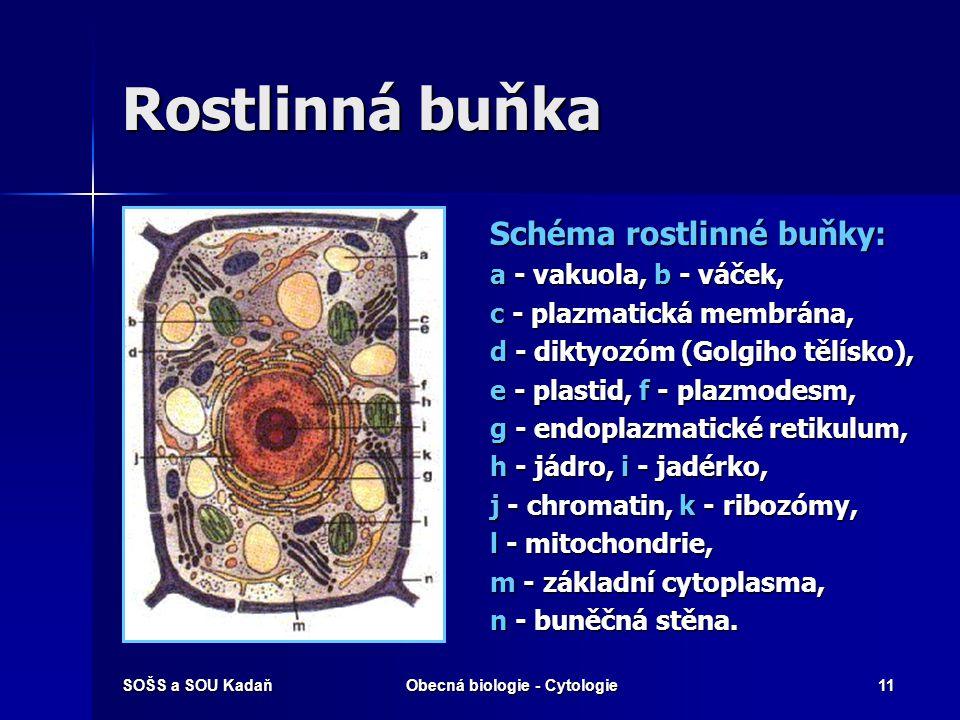 SOŠS a SOU KadaňObecná biologie - Cytologie11 Rostlinná buňka Schéma rostlinné buňky: a - vakuola, b - váček, c - plazmatická membrána, d - diktyozóm