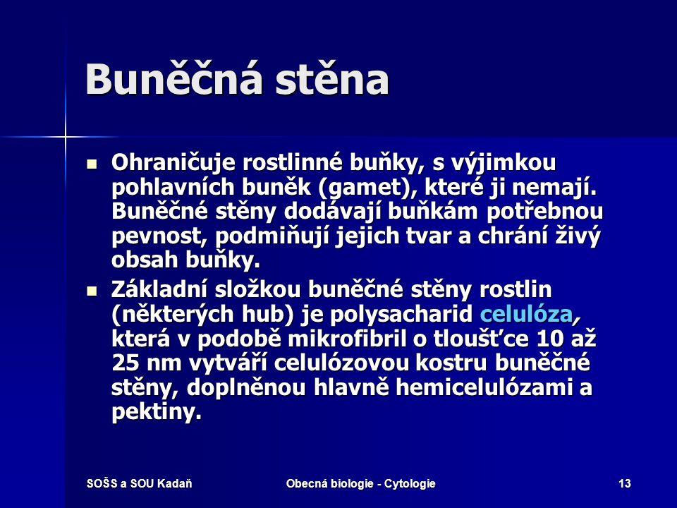 SOŠS a SOU KadaňObecná biologie - Cytologie13 Buněčná stěna Ohraničuje rostlinné buňky, s výjimkou pohlavních buněk (gamet), které ji nemají. Buněčné