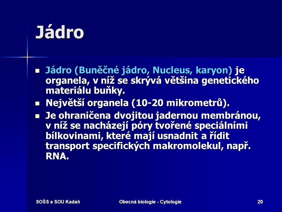 SOŠS a SOU KadaňObecná biologie - Cytologie20 Jádro Jádro (Buněčné jádro, Nucleus, karyon) je organela, v níž se skrývá většina genetického materiálu