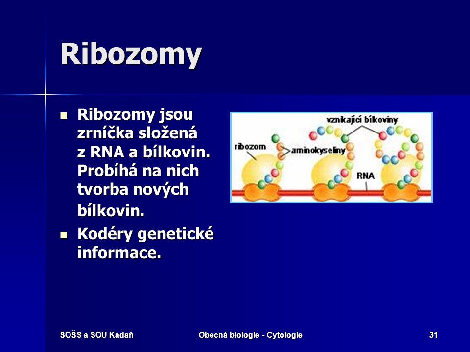 SOŠS a SOU KadaňObecná biologie - Cytologie31 Ribozomy Ribozomy jsou zrníčka složená z RNA a bílkovin. Probíhá na nich tvorba nových bílkovin. Ribozom