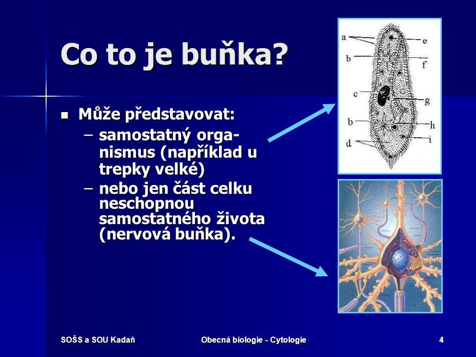 SOŠS a SOU KadaňObecná biologie - Cytologie4 Co to je buňka? Může představovat: Může představovat: –samostatný orga- nismus (například u trepky velké)