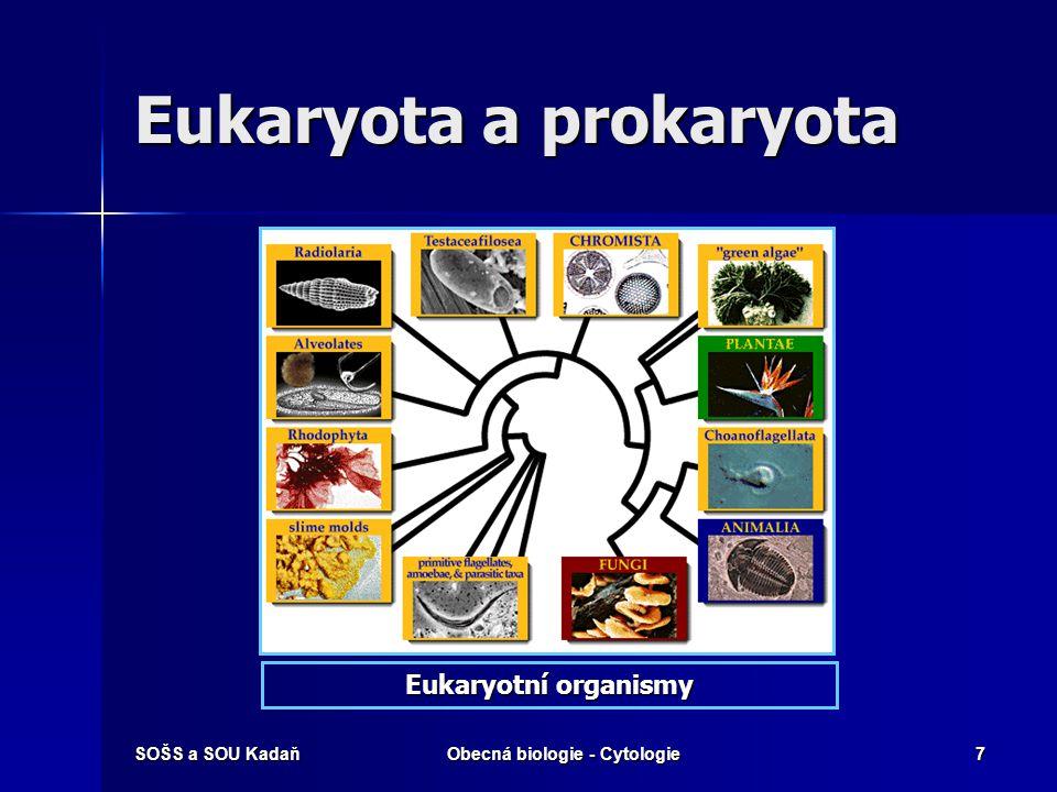 SOŠS a SOU KadaňObecná biologie - Cytologie18 Cytoplazmatické struktury Buněčné jádro Buněčné jádro ER ER GK GK Semiautonomní organely Semiautonomní organely Ribozómy Ribozómy Lysozómy Lysozómy Vakuoly Vakuoly Fibrilární struktury (cytoskelet) Fibrilární struktury (cytoskelet)