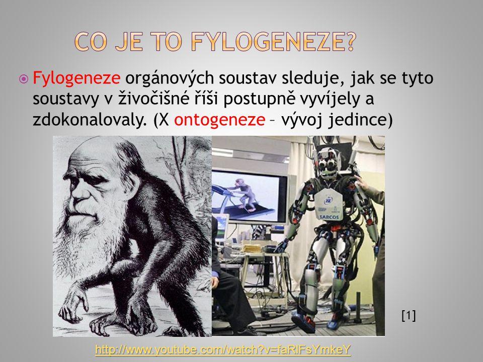  Fylogeneze orgánových soustav sleduje, jak se tyto soustavy v živočišné říši postupně vyvíjely a zdokonalovaly.