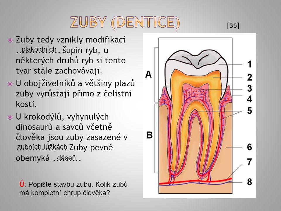 strop ústní dutiny se nazývá ústní.......  jazyk: vzniká při přechodu obratlovců na souš ze svalů báze dutiny ústní, úpon svalů na skelet..........