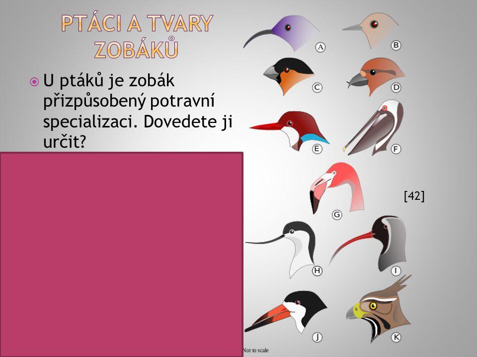 Popište trávicí soustavu ptáků včetně funkcí jednotlivých orgánů: [40] 1 – jícen 2 – vole 3 – žláznatý žaludek 4 – svalnatý žaludek 5 – tenké střevo 6
