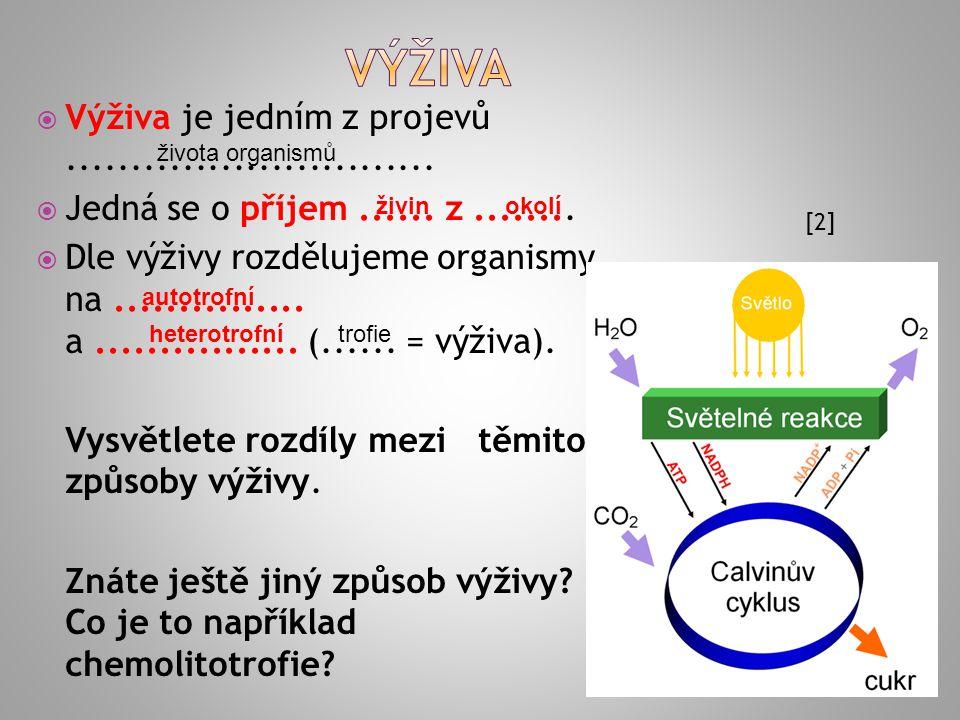 1.HEPATOPANKREAS 2.TYFLOSOLIS 3.ENDOSTYL 4.RADULA 5.LÁČKA 6.MASTAX [40]