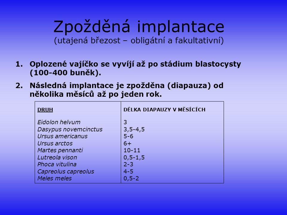 Zpožděná implantace (utajená březost – obligátní a fakultativní) 1.Oplozené vajíčko se vyvíjí až po stádium blastocysty (100-400 buněk). 2.Následná im