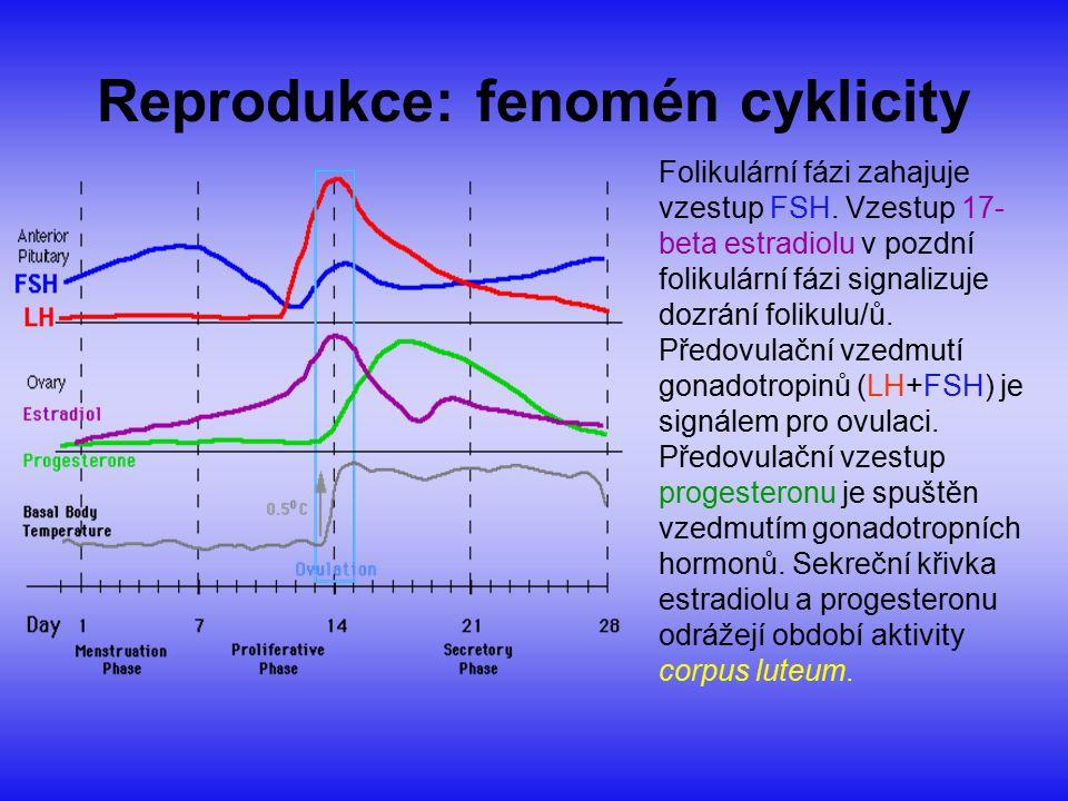 Reprodukce: fenomén cyklicity Folikulární fázi zahajuje vzestup FSH. Vzestup 17- beta estradiolu v pozdní folikulární fázi signalizuje dozrání folikul