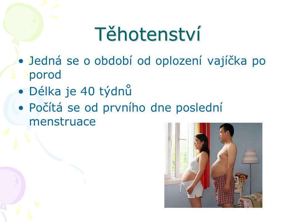 Těhotenství Jedná se o období od oplození vajíčka po porod Délka je 40 týdnů Počítá se od prvního dne poslední menstruace