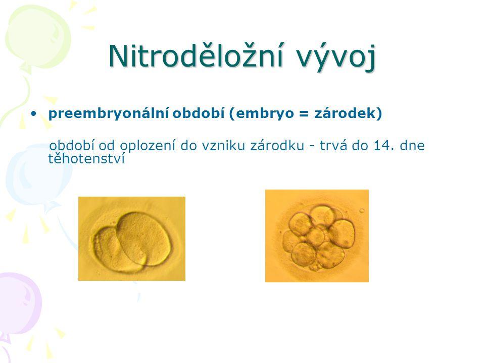 Nitroděložní vývoj preembryonální období (embryo = zárodek) období od oplození do vzniku zárodku - trvá do 14. dne těhotenství