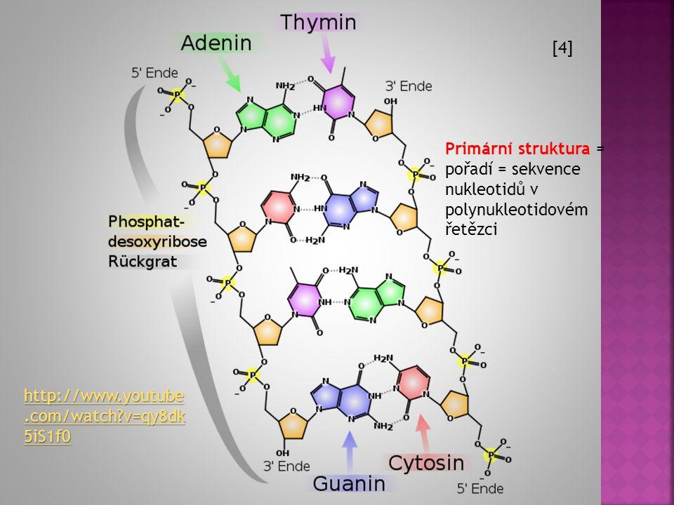  Mezi zbytkem H 3 PO 4 jednoho nukleotidu (5. C) a hydroxylem na 3. C atomu pentosy druhého nukleotidu vznikne esterová vazba.  Jednotlivé nukleotid