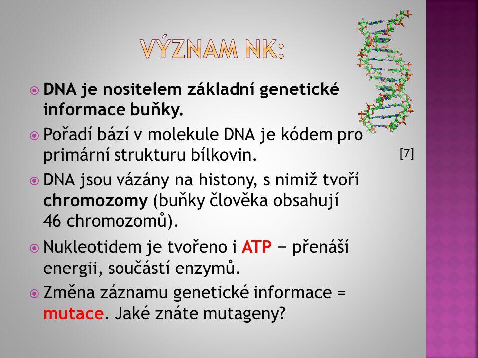 [15] http://www.youtube.com/watch?v=zr_O8aJKHnI&feature=related TRANSKRIPCE (= přepis genetického kódu o primární struktuře bílkovin z DNA v jádře na