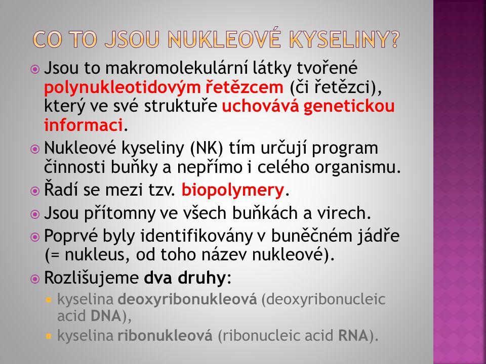  Jsou to makromolekulární látky tvořené polynukleotidovým řetězcem (či řetězci), který ve své struktuře uchovává genetickou informaci.