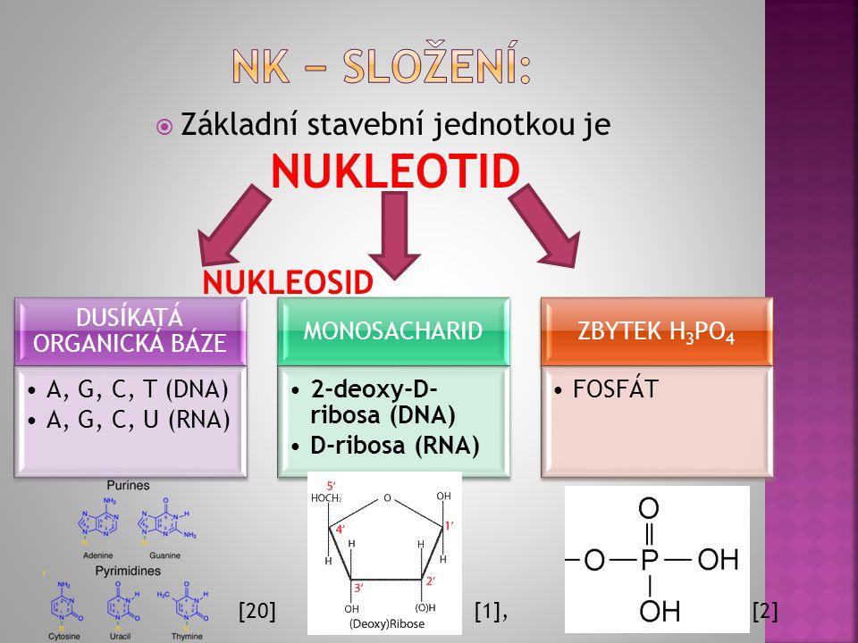  Základní stavební jednotkou je NUKLEOTID DUSÍKATÁ ORGANICKÁ BÁZE A, G, C, T (DNA) A, G, C, U (RNA) MONOSACHARID 2-deoxy-D- ribosa (DNA) D-ribosa (RNA) ZBYTEK H3PO4 FOSFÁT NUKLEOSID [1], [2][20]