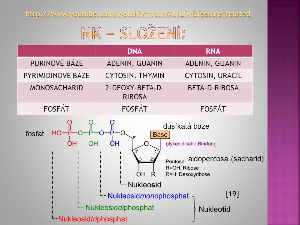  Základní stavební jednotkou je NUKLEOTID DUSÍKATÁ ORGANICKÁ BÁZE A, G, C, T (DNA) A, G, C, U (RNA) MONOSACHARID 2-deoxy-D- ribosa (DNA) D-ribosa (RN