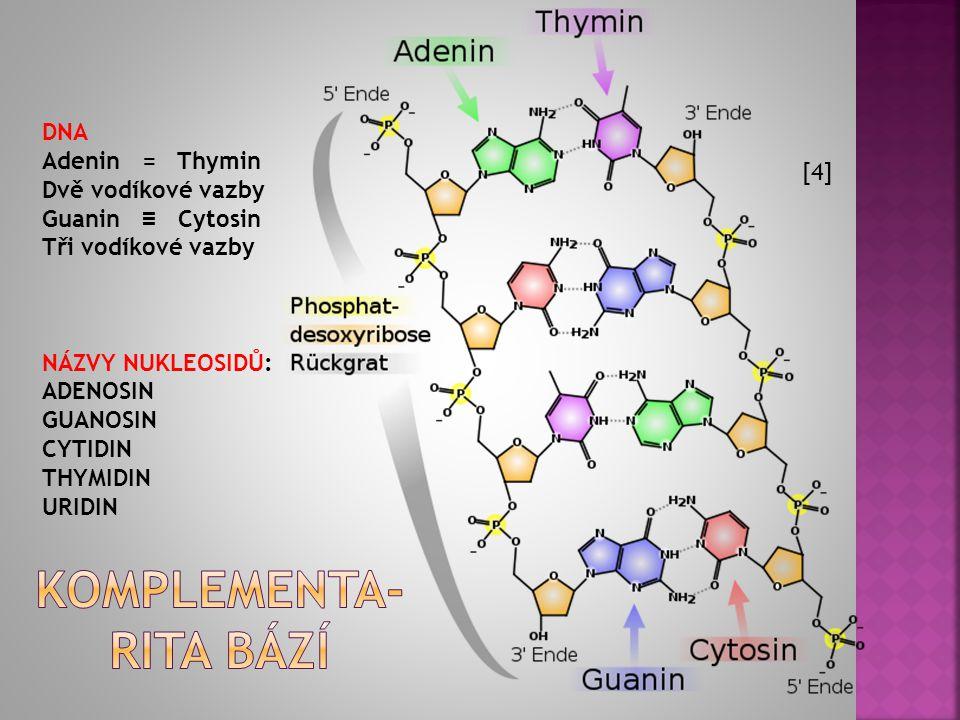 KOMPLEMENTARITA BÁZÍ (= párování bází v NK pomocí vodíkových vazeb = můstků) : DNA Adenin = Thymin Dvě vodíkové vazby Guanin ≡ Cytosin Tři vodíkové va